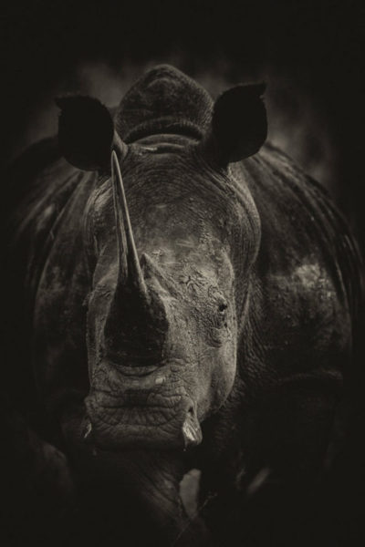 Rhino-Black-and-White